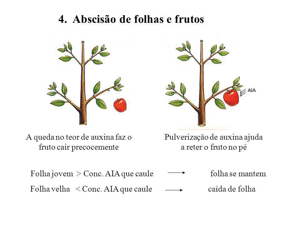 4. Abscisão de folhas e frutos