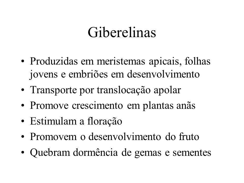 Giberelinas Produzidas em meristemas apicais, folhas jovens e embriões em desenvolvimento. Transporte por translocação apolar.