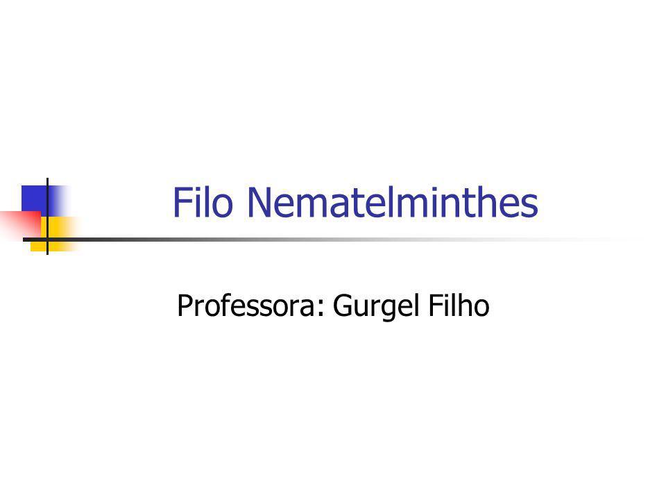 Professora: Gurgel Filho