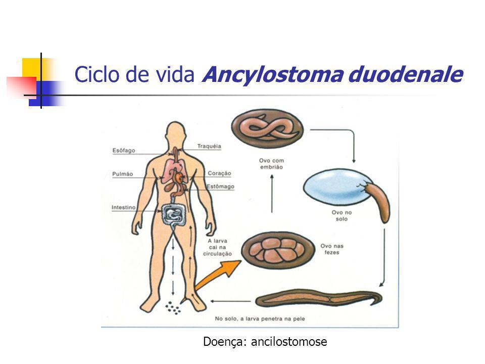 Ciclo de vida Ancylostoma duodenale