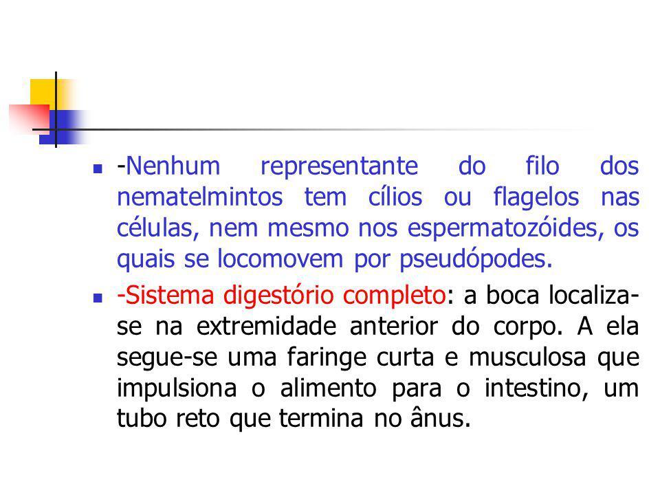 -Nenhum representante do filo dos nematelmintos tem cílios ou flagelos nas células, nem mesmo nos espermatozóides, os quais se locomovem por pseudópodes.