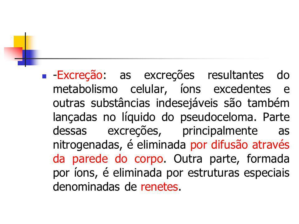 -Excreção: as excreções resultantes do metabolismo celular, íons excedentes e outras substâncias indesejáveis são também lançadas no líquido do pseudoceloma.