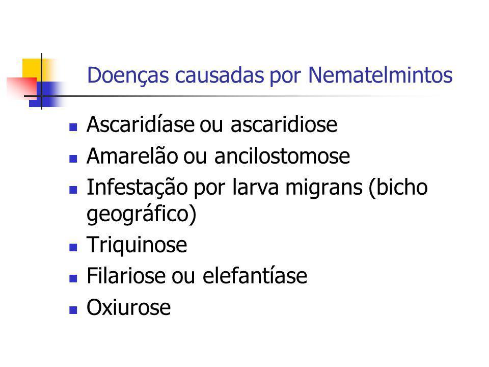 Doenças causadas por Nematelmintos