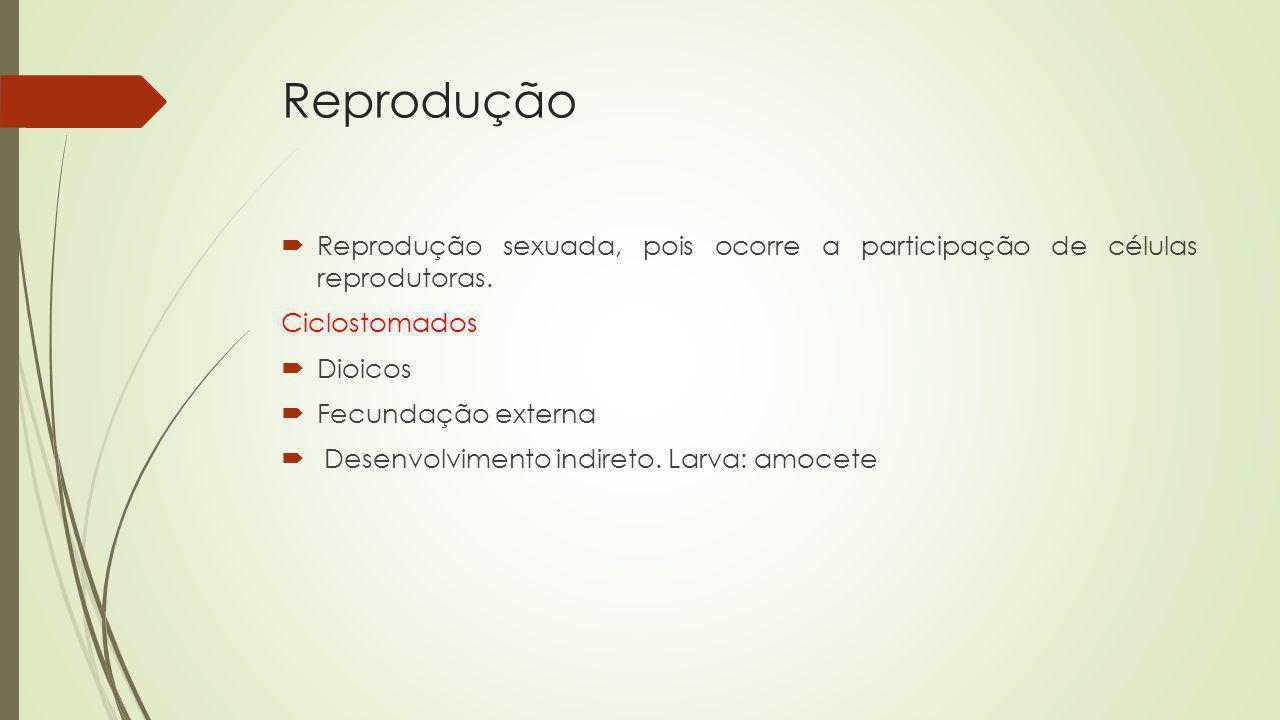 Reprodução Reprodução sexuada, pois ocorre a participação de células reprodutoras. Ciclostomados.