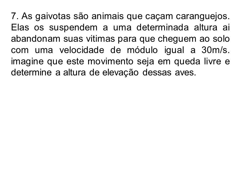 7. As gaivotas são animais que caçam caranguejos
