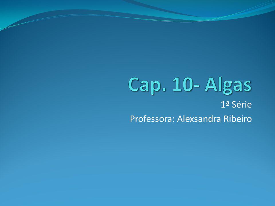 1ª Série Professora: Alexsandra Ribeiro