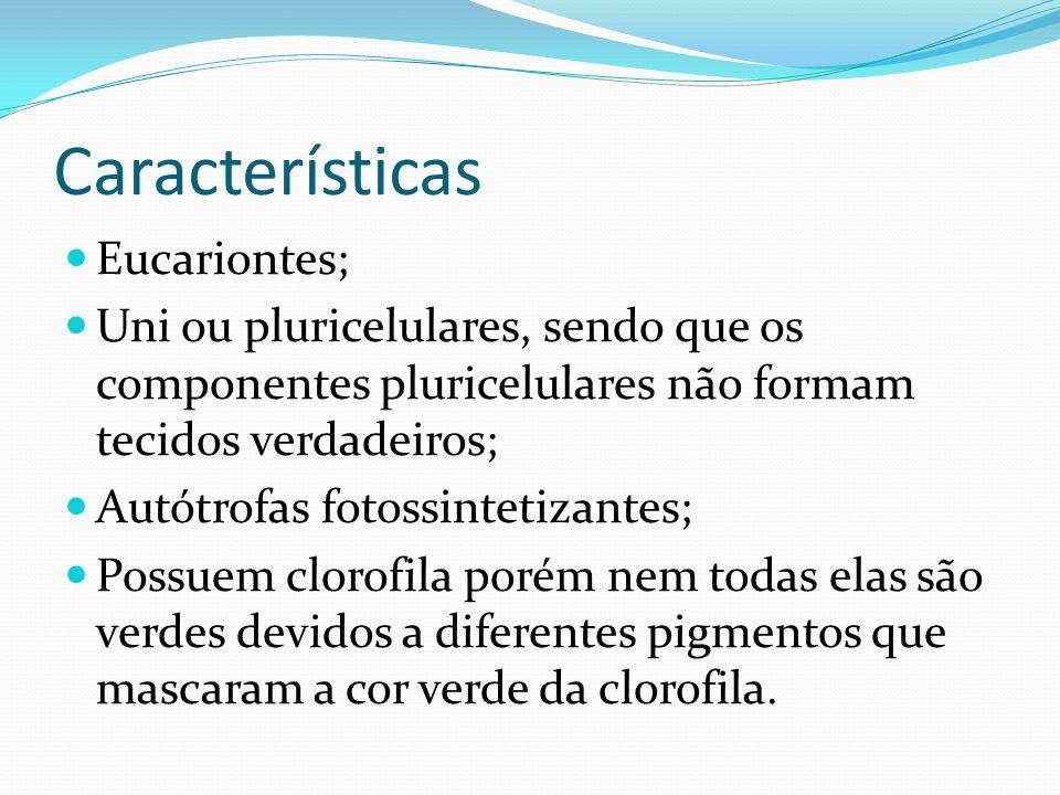 Características Eucariontes;