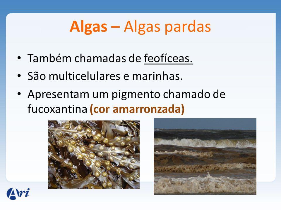 Algas – Algas pardas Também chamadas de feofíceas.