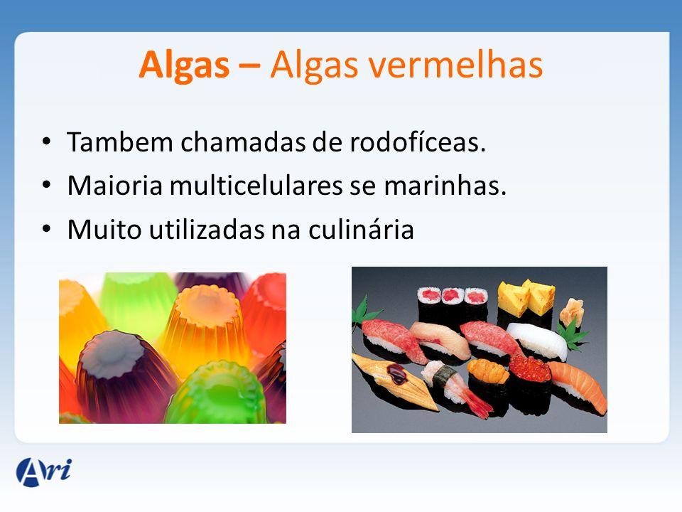 Algas – Algas vermelhas