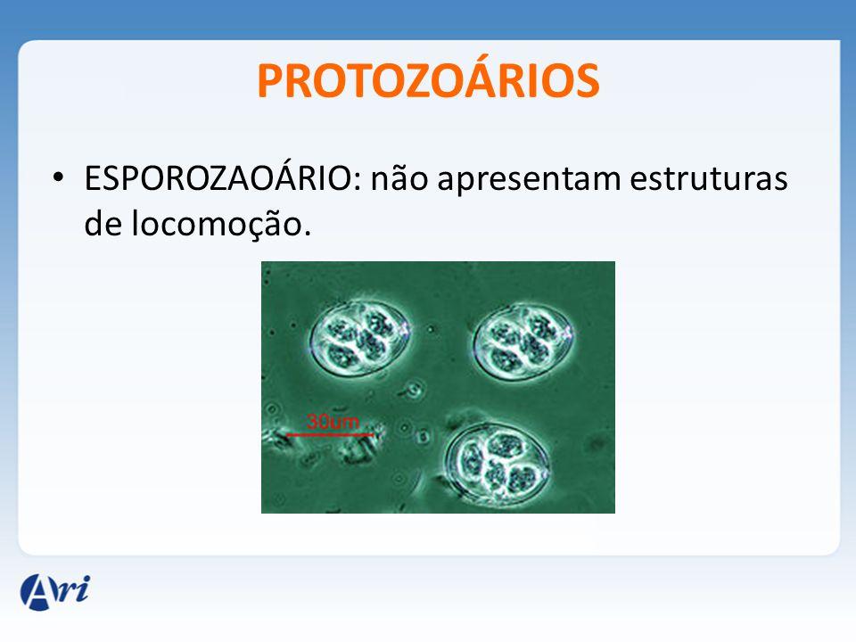 PROTOZOÁRIOS ESPOROZAOÁRIO: não apresentam estruturas de locomoção.