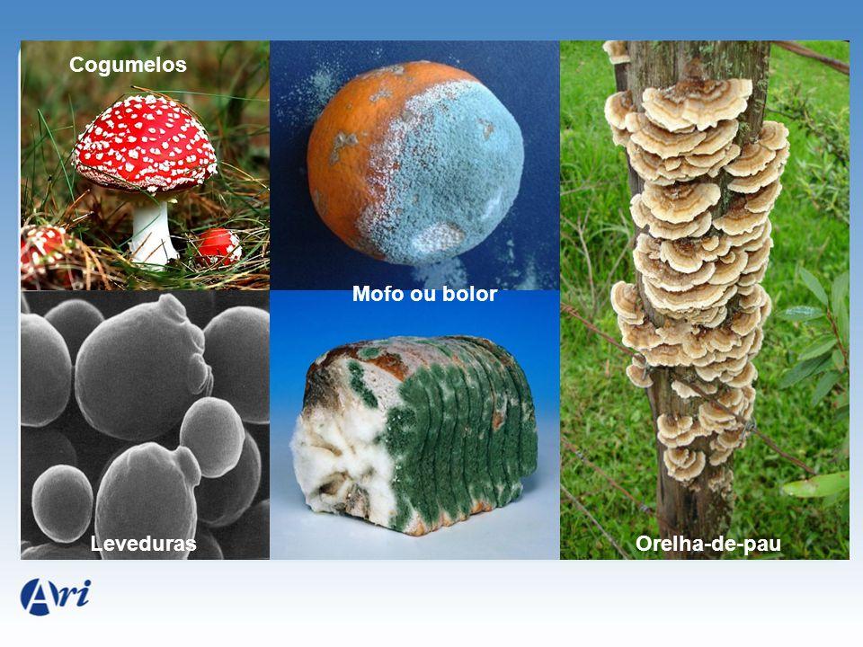 Cogumelos Mofo ou bolor Leveduras Orelha-de-pau