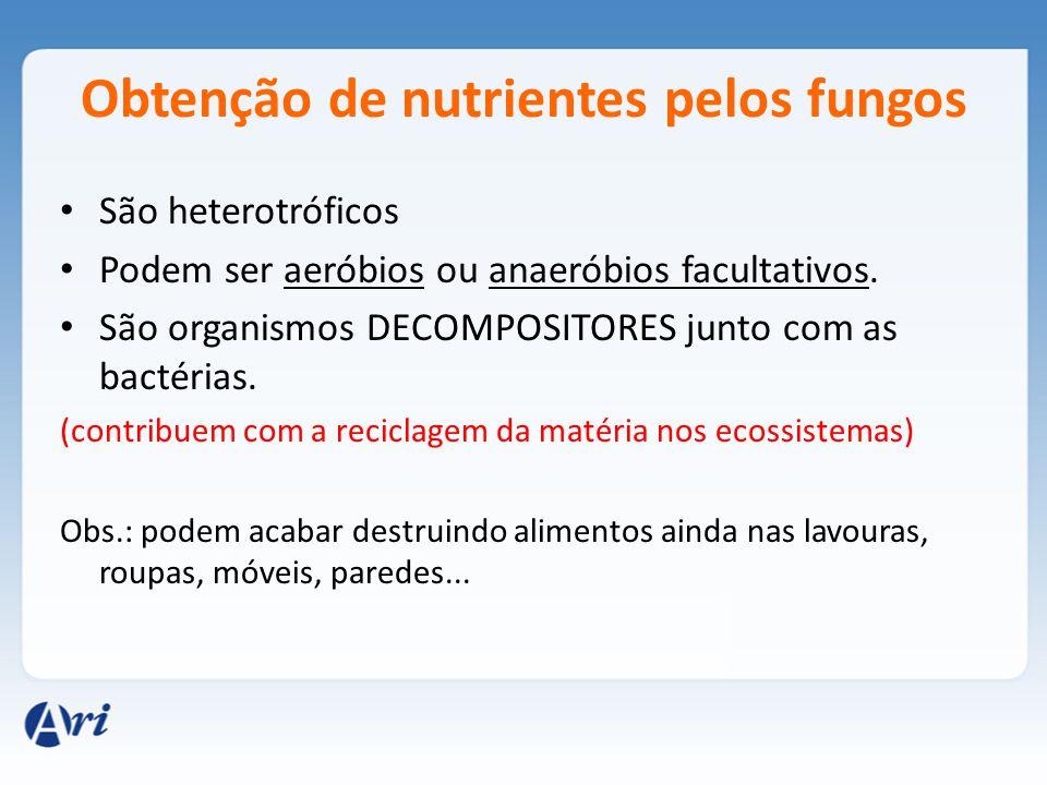 Obtenção de nutrientes pelos fungos