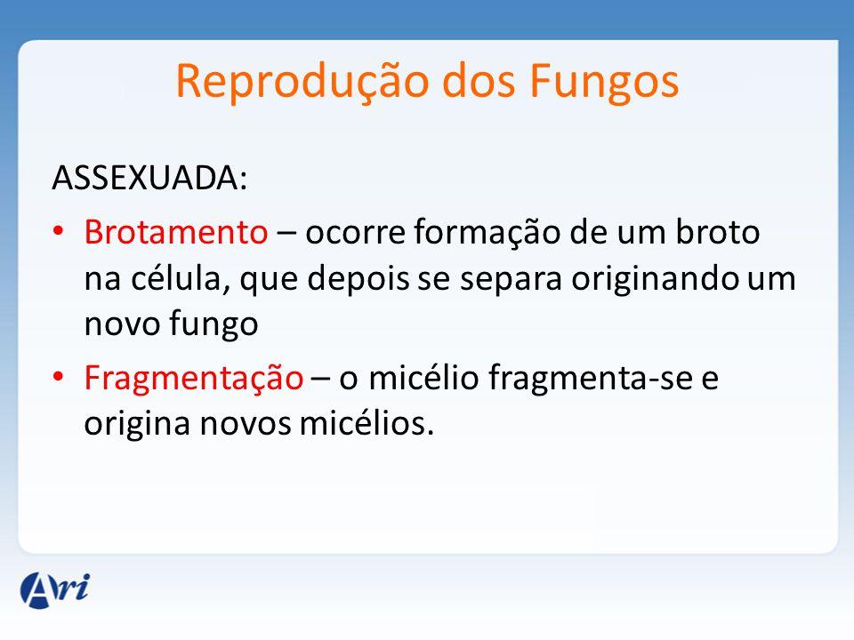 Reprodução dos Fungos ASSEXUADA: