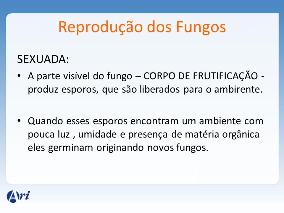 Reprodução dos Fungos SEXUADA: