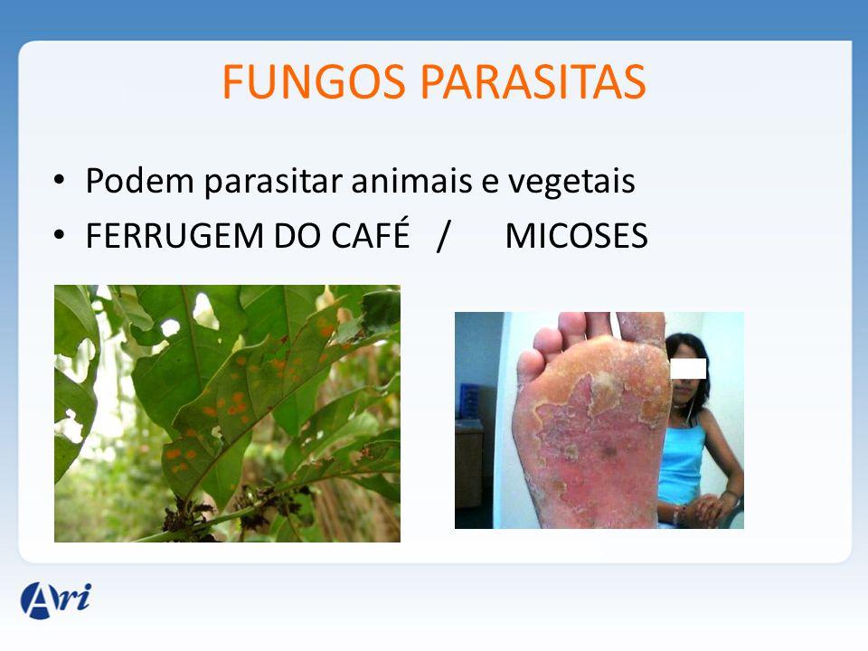 FUNGOS PARASITAS Podem parasitar animais e vegetais