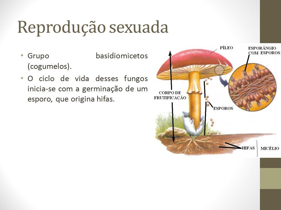 Reprodução sexuada Grupo basidiomicetos (cogumelos).