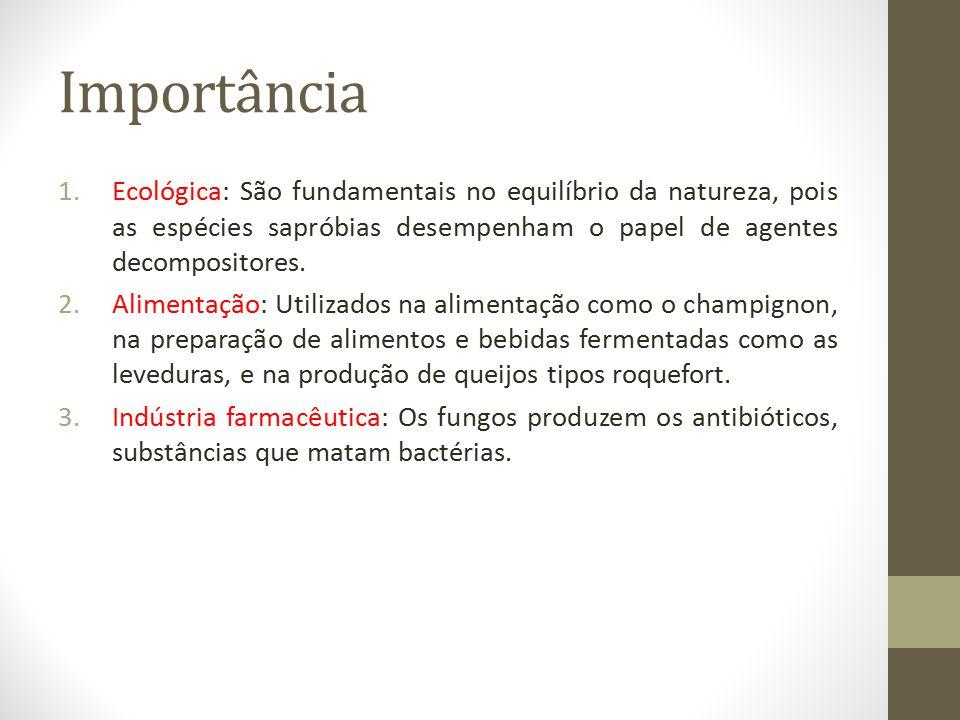 Importância Ecológica: São fundamentais no equilíbrio da natureza, pois as espécies sapróbias desempenham o papel de agentes decompositores.