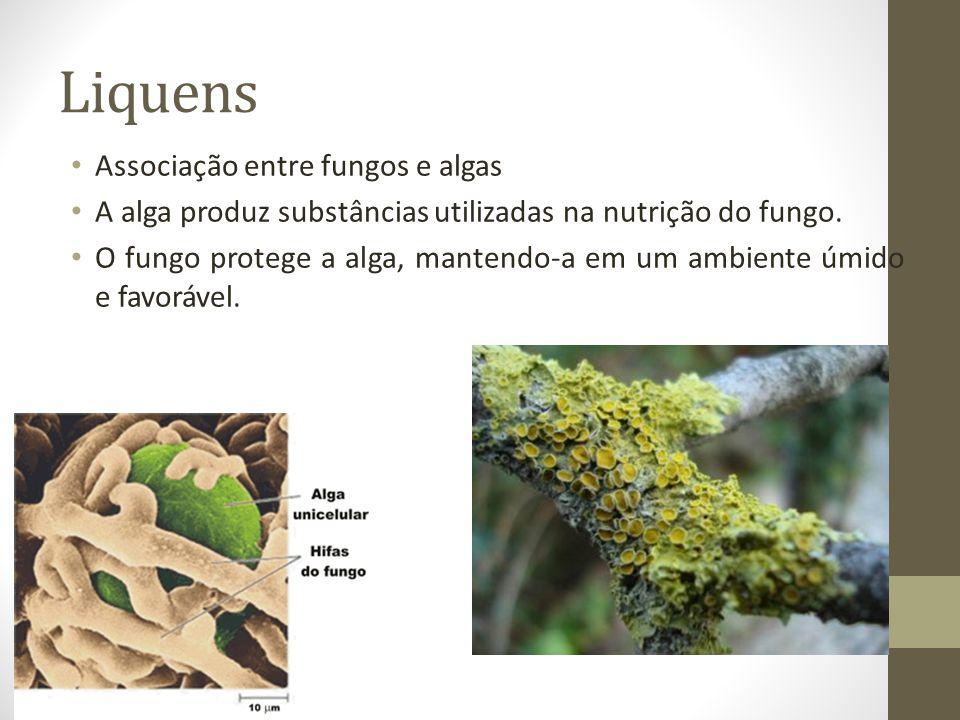 Liquens Associação entre fungos e algas