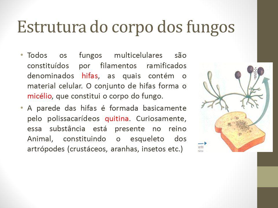 Estrutura do corpo dos fungos