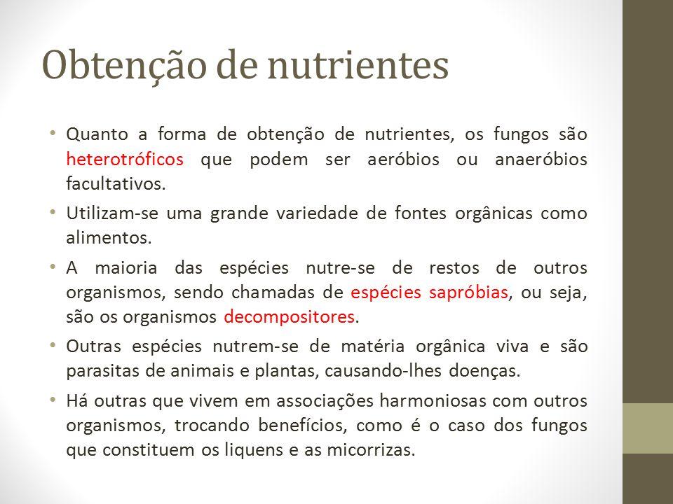 Obtenção de nutrientes