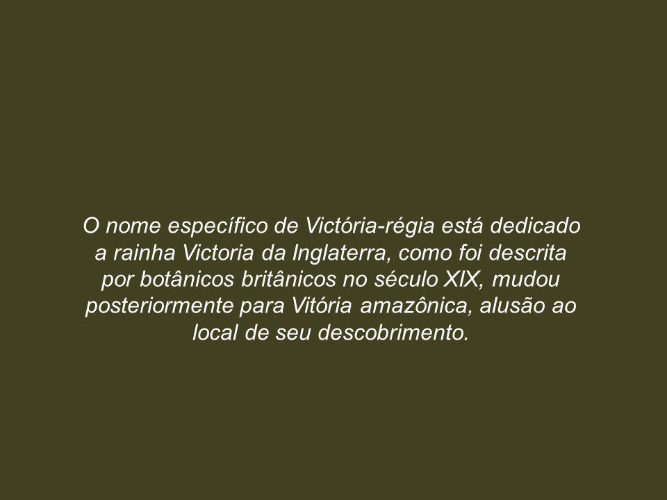 O nome específico de Victória-régia está dedicado a rainha Victoria da Inglaterra, como foi descrita por botânicos britânicos no século XIX, mudou posteriormente para Vitória amazônica, alusão ao local de seu descobrimento.