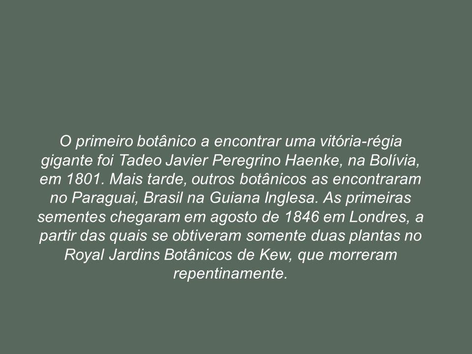 O primeiro botânico a encontrar uma vitória-régia gigante foi Tadeo Javier Peregrino Haenke, na Bolívia, em 1801.