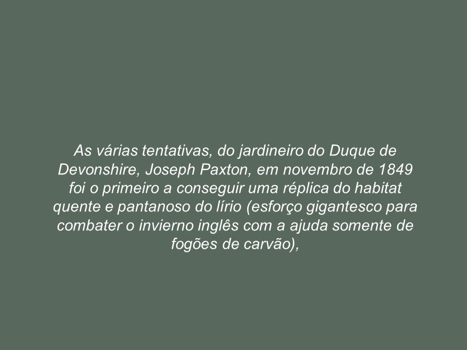 As várias tentativas, do jardineiro do Duque de Devonshire, Joseph Paxton, em novembro de 1849 foi o primeiro a conseguir uma réplica do habitat quente e pantanoso do lírio (esforço gigantesco para combater o invierno inglês com a ajuda somente de fogões de carvão),