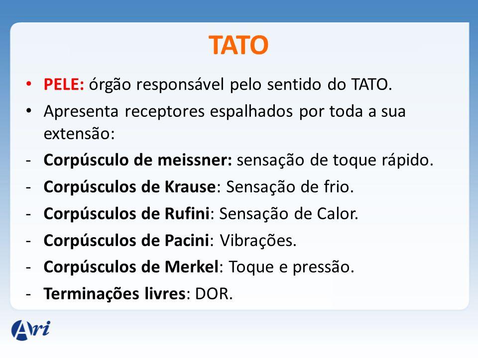 TATO PELE: órgão responsável pelo sentido do TATO.