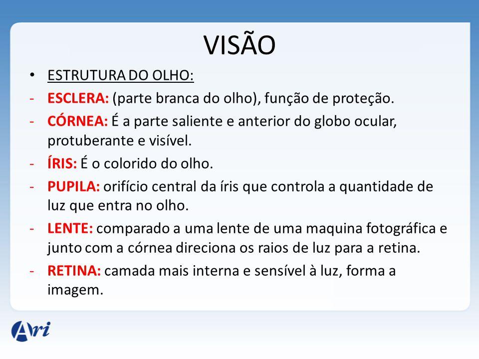 VISÃO ESTRUTURA DO OLHO: