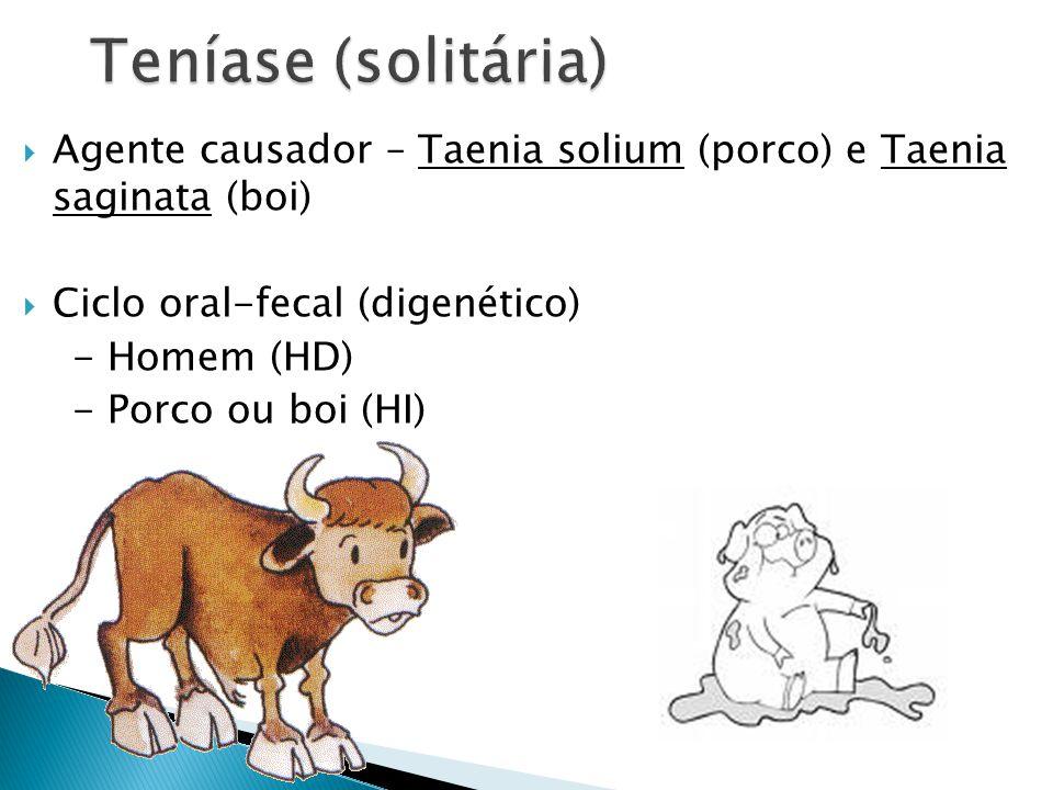 Teníase (solitária) Agente causador – Taenia solium (porco) e Taenia saginata (boi) Ciclo oral-fecal (digenético)