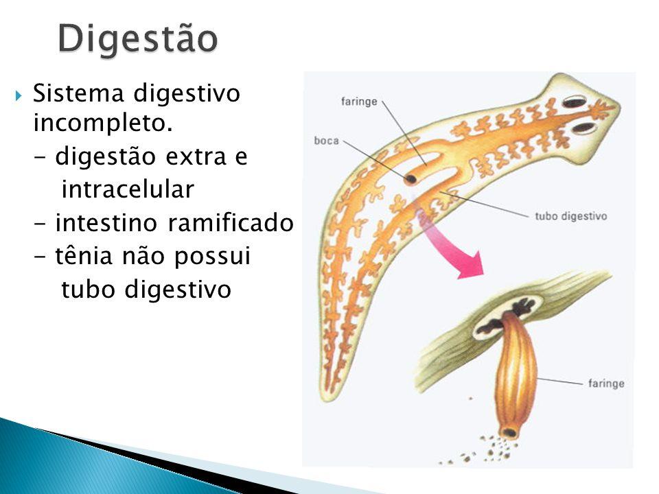 Digestão Sistema digestivo incompleto. - digestão extra e intracelular