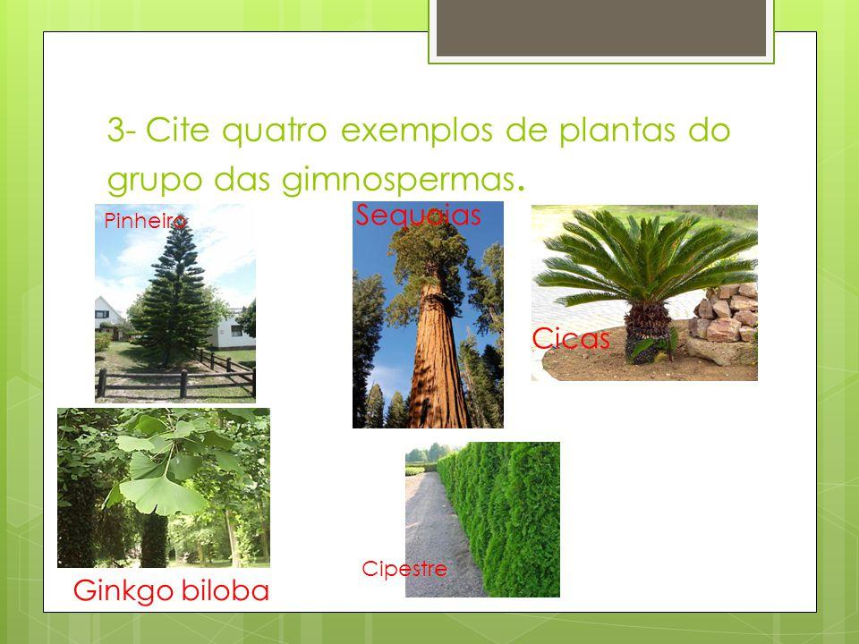 3- Cite quatro exemplos de plantas do grupo das gimnospermas.