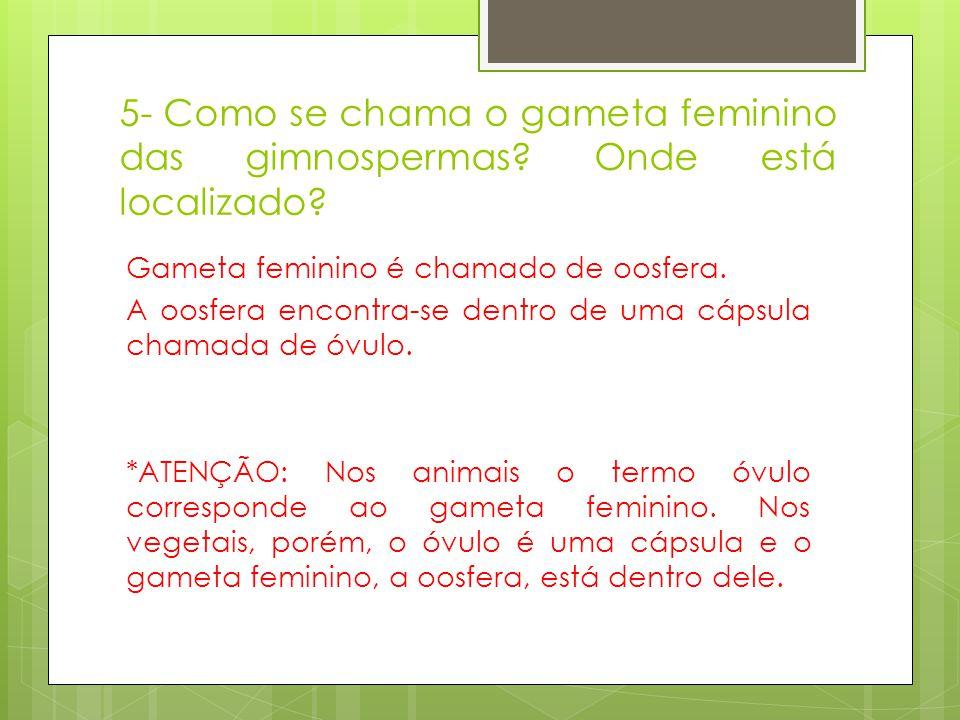 5- Como se chama o gameta feminino das gimnospermas