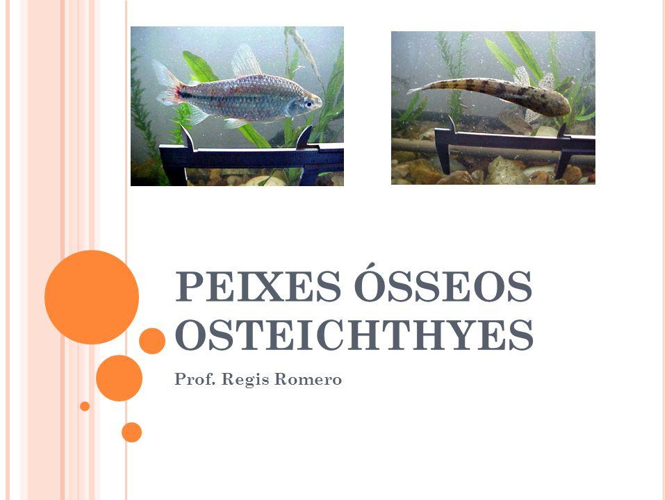 PEIXES ÓSSEOS OSTEICHTHYES