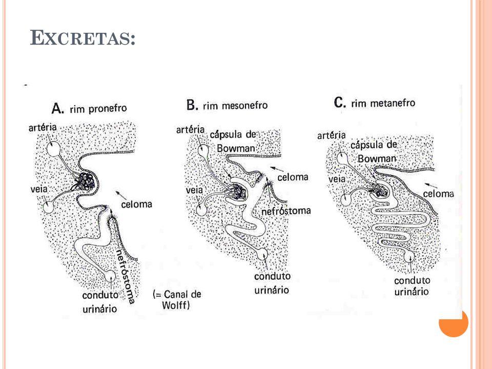 Excretas: