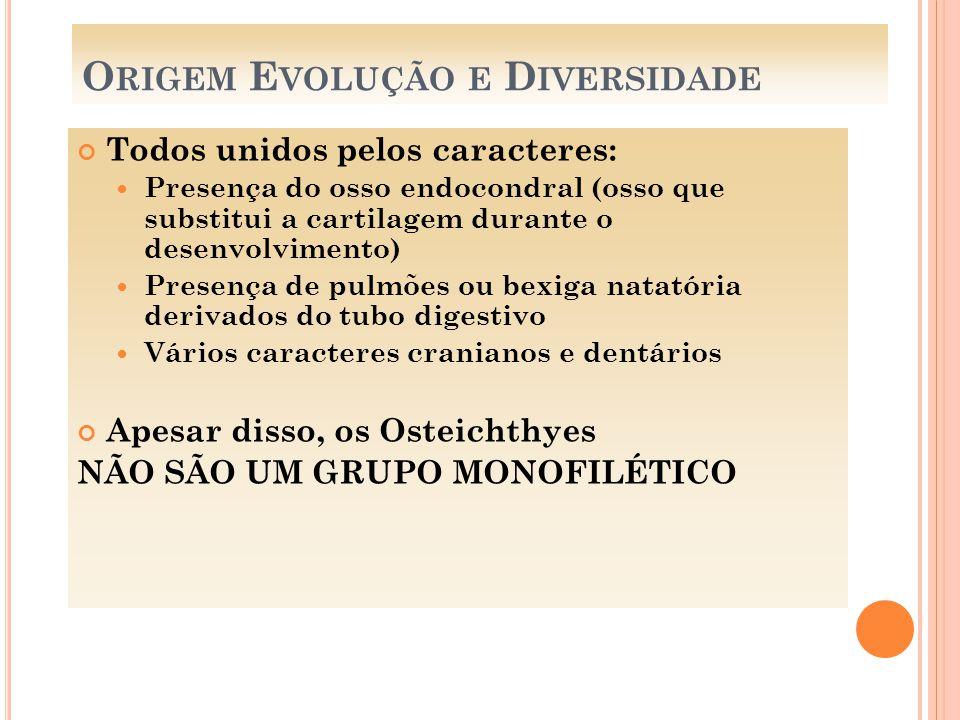 Origem Evolução e Diversidade