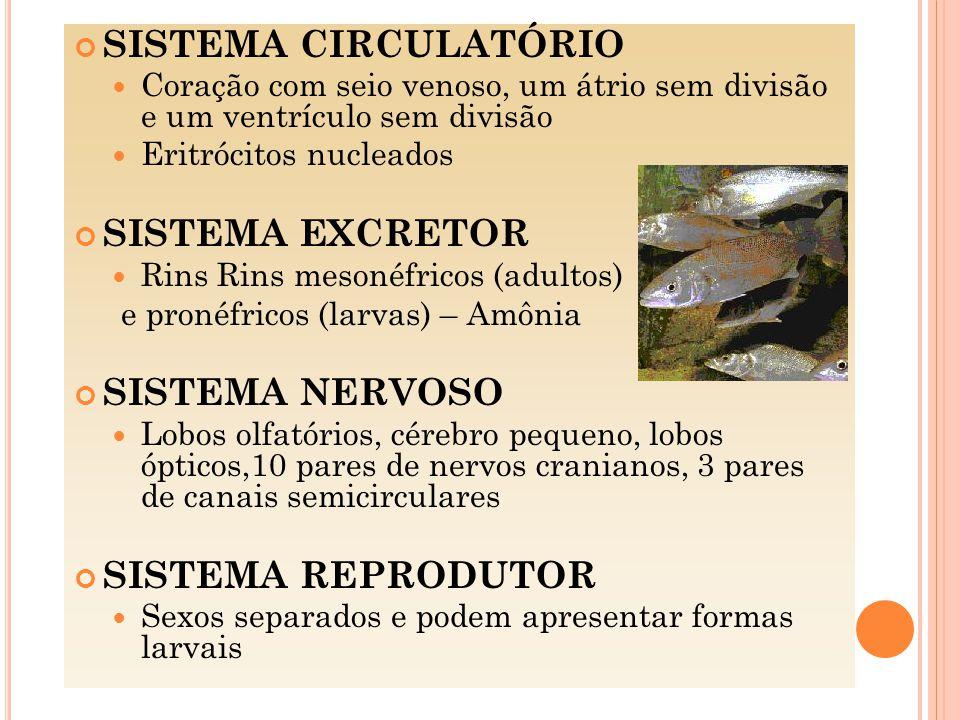 SISTEMA CIRCULATÓRIO SISTEMA EXCRETOR SISTEMA NERVOSO