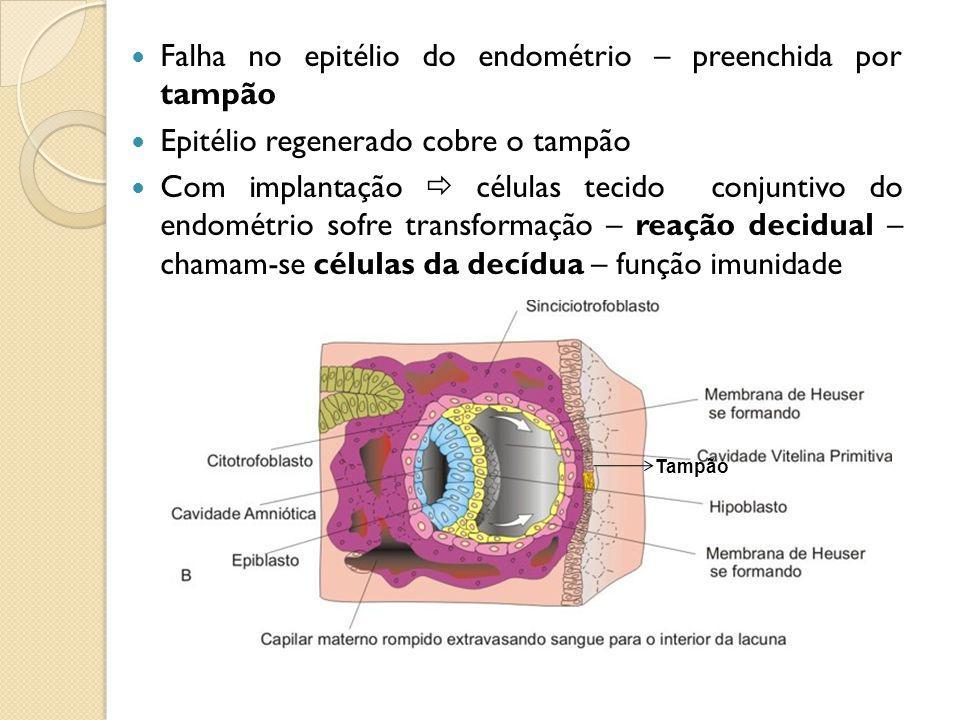 Falha no epitélio do endométrio – preenchida por tampão