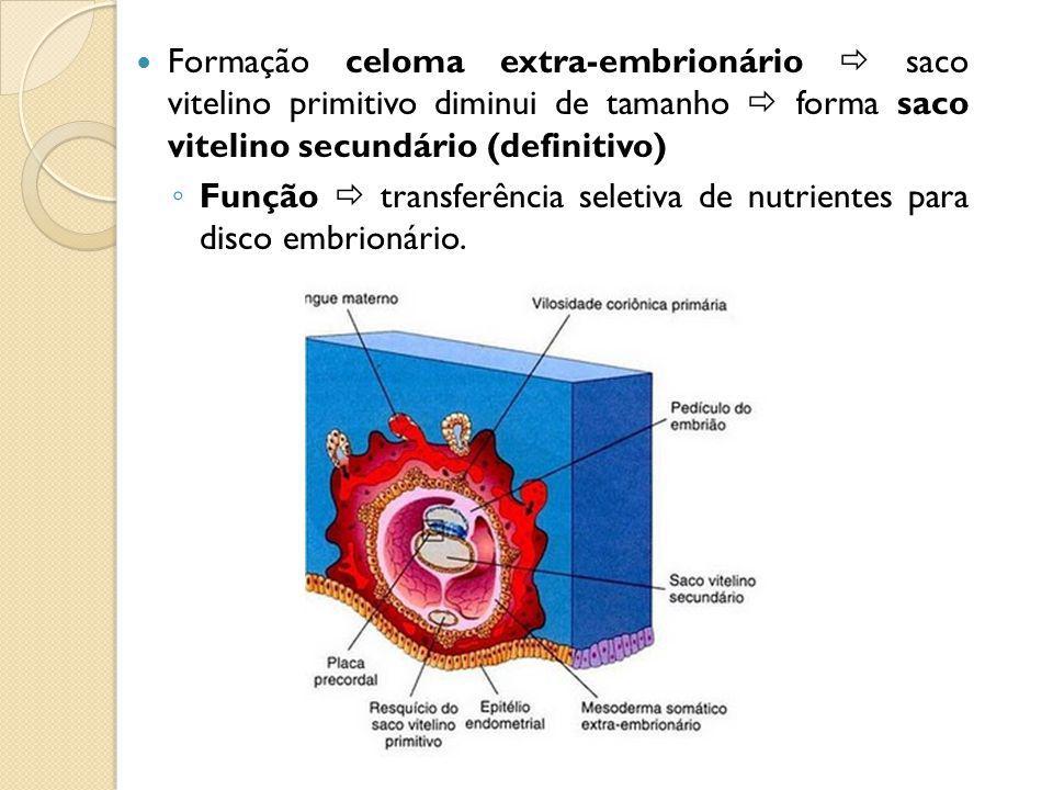 Formação celoma extra-embrionário  saco vitelino primitivo diminui de tamanho  forma saco vitelino secundário (definitivo)