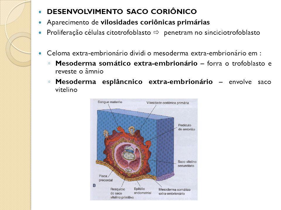 DESENVOLVIMENTO SACO CORIÔNICO