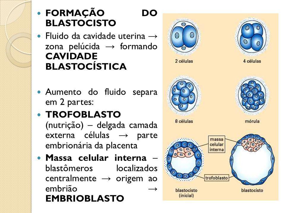 FORMAÇÃO DO BLASTOCISTO
