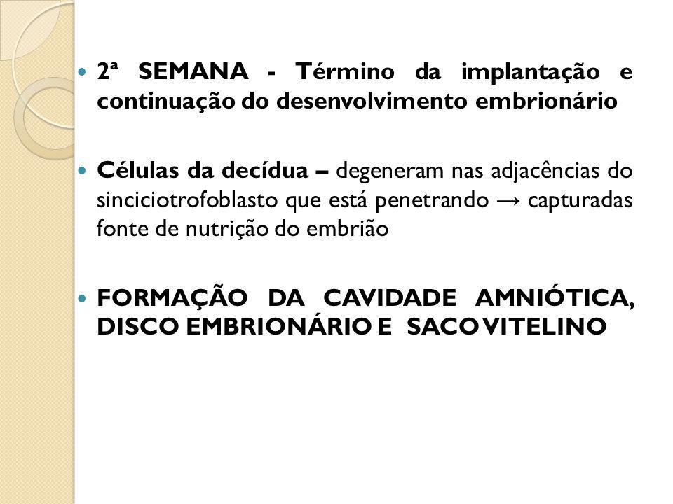 2ª SEMANA - Término da implantação e continuação do desenvolvimento embrionário