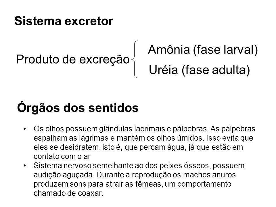Sistema excretor Amônia (fase larval) Produto de excreção