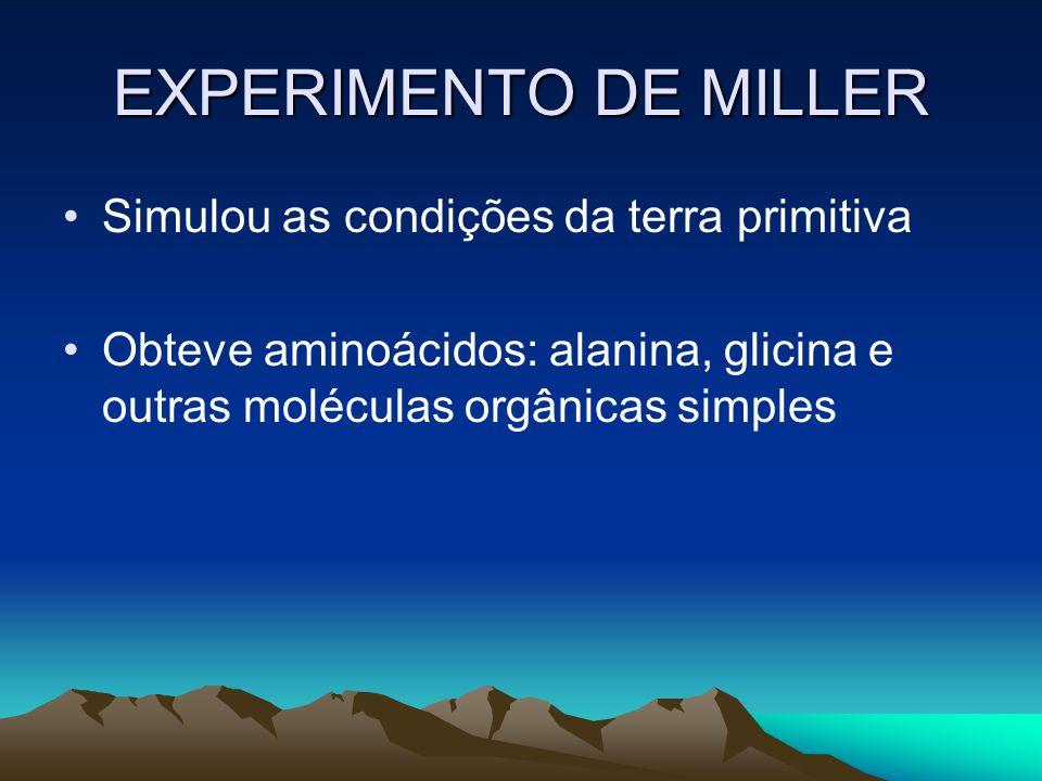 EXPERIMENTO DE MILLER Simulou as condições da terra primitiva