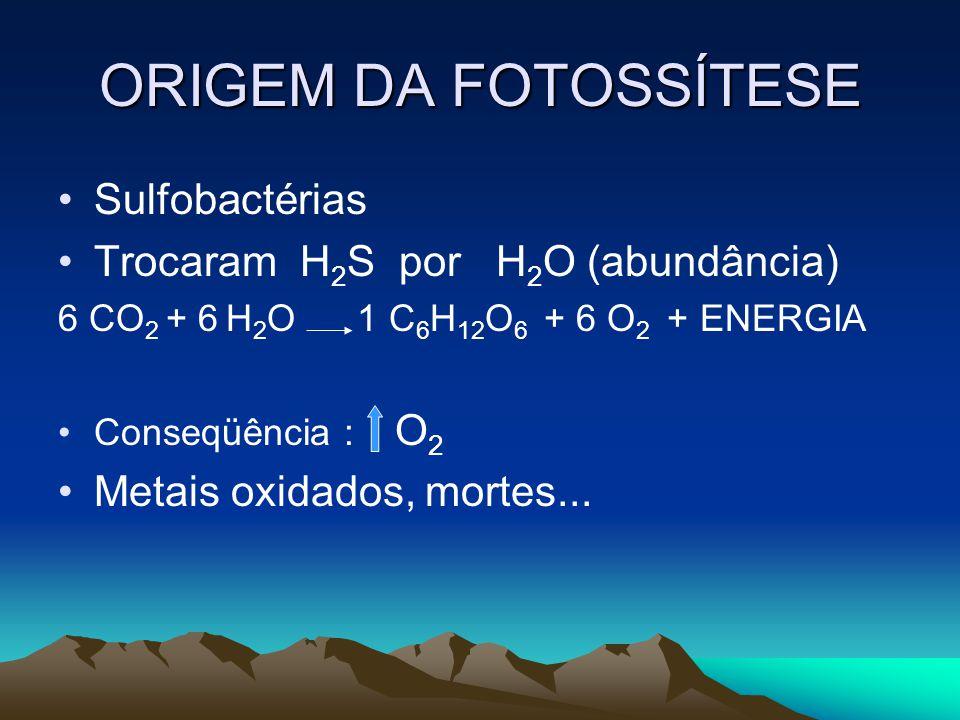 ORIGEM DA FOTOSSÍTESE Sulfobactérias Trocaram H2S por H2O (abundância)