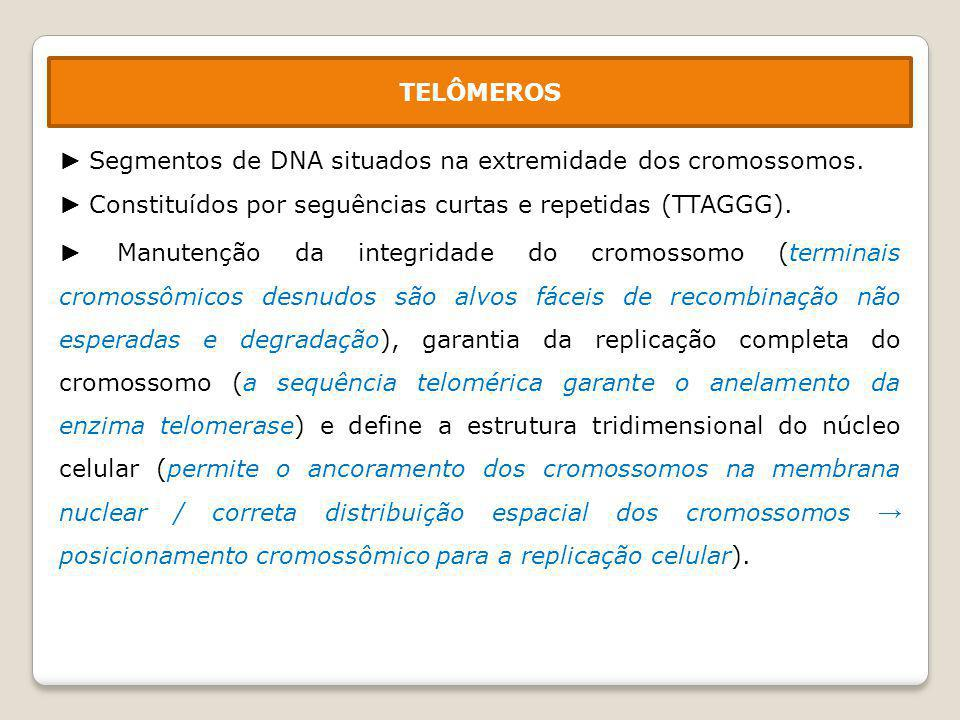 TELÔMEROS ► Segmentos de DNA situados na extremidade dos cromossomos. ► Constituídos por seguências curtas e repetidas (TTAGGG).