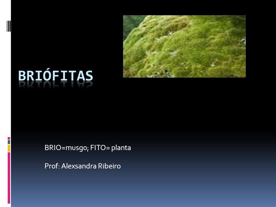 BRIO=musgo; FITO= planta Prof: Alexsandra Ribeiro