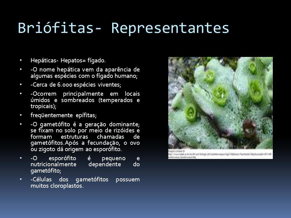 Briófitas- Representantes