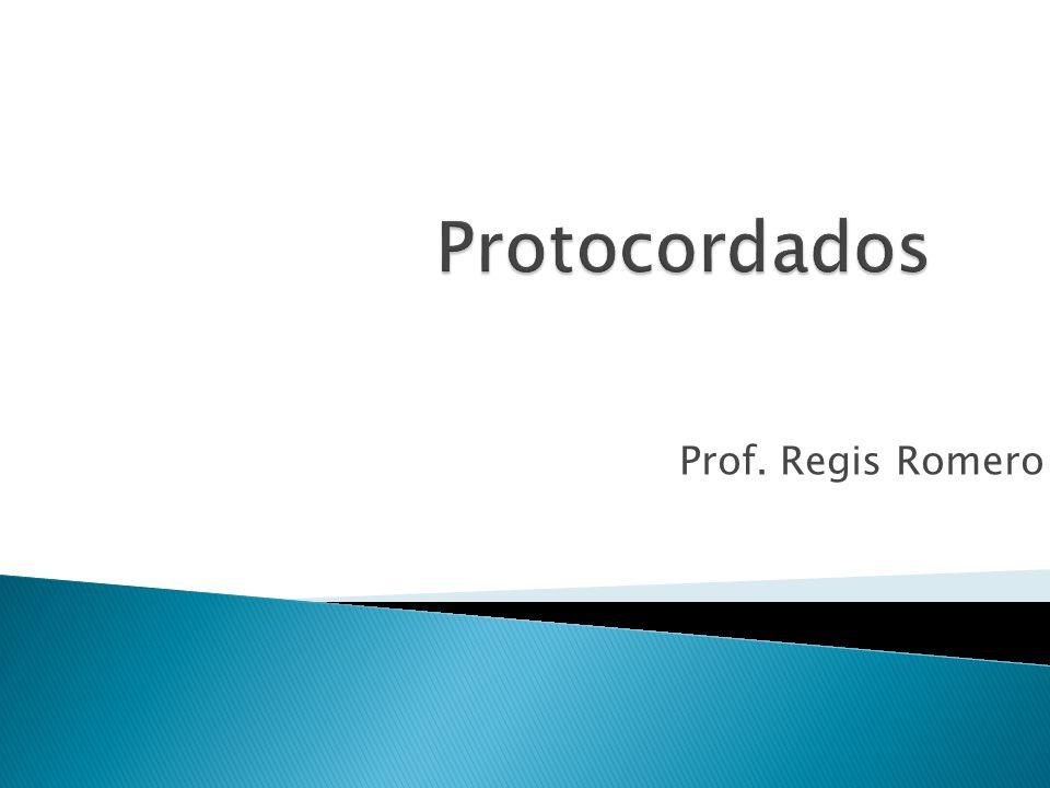Protocordados Prof. Regis Romero