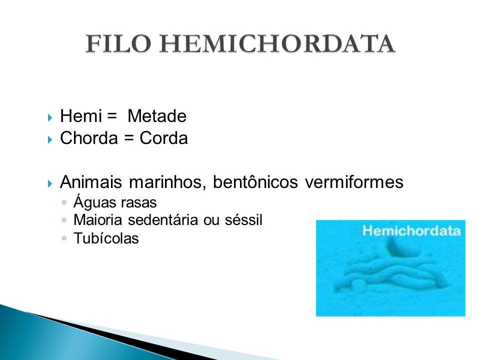FILO HEMICHORDATA Hemi = Metade Chorda = Corda